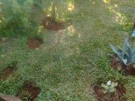 Trabajo de Limpiesa D Cs O Jardín X Hora