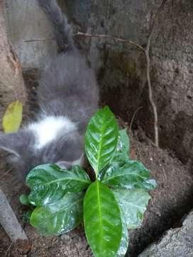 Bello gatito busca hogar