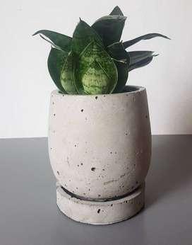 Macetas Ovoides 3 Unidades de Cemento con Platito varios diseños y colores