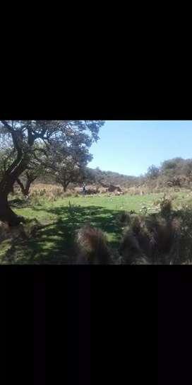 Vendo campo 2 hectáreas en los morteritos