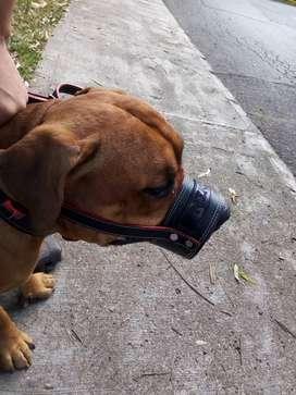 Bozal para perros  totalmente de cuero y Marcado con el nombre de su perro