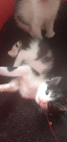 gaticos adopcion