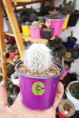 Cactus especiales