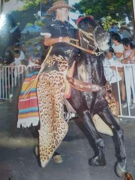 Se vende lindo  caballo reproductor