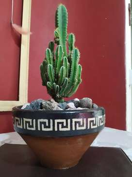 Cactus Castillo de Hadas. En macetas de Barro pintadas.