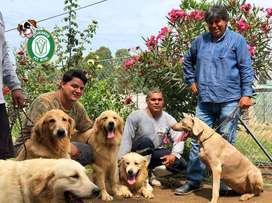 Cachorros Pastor,Golden,Labrador,Doberman,Westy,,pitbull,bulldog,pug,beagle,yorshire,shitzu,cocker,samoyedo en PET VITAL