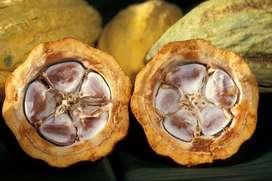 Contratar los servicios de un ingeniero Agroindustrial para que labore en centro de acopio de cacao Tonsupa-Esmeraldas