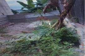 terreno de venta en jipijapa zona centro