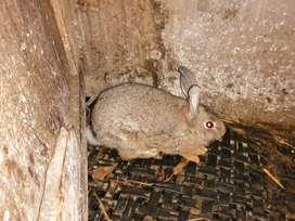 Conejos económicos