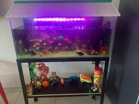 acuario pescera