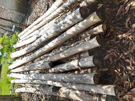Vendo troncos de pino cipres $100.000 c/u