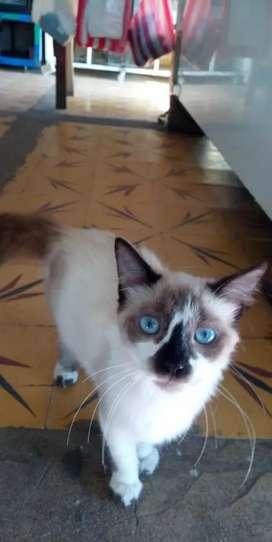 Busco gatito en adopcion