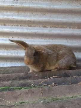 Conejos y cobayos