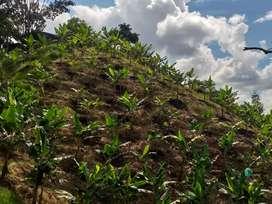 Vendo Terreno en Yarumal Via Alegrias