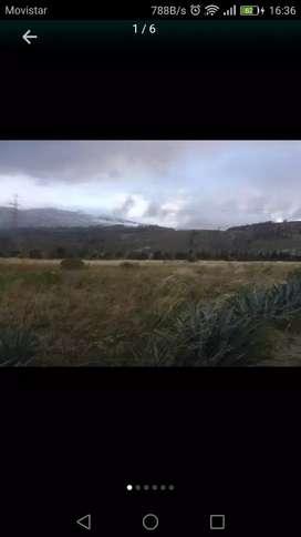 De oportunidad vendo 6 hectareas de terreno en Salcedo (Jachaguango)