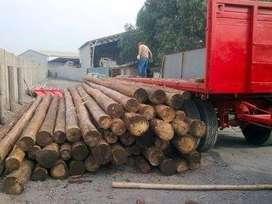 Maderera el cedro