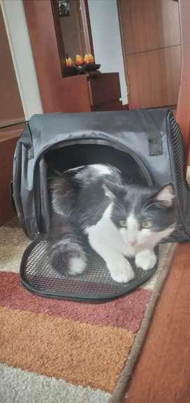 Morral para transportar gatos