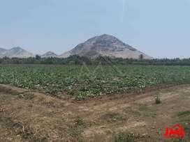 Terreno DE 1 Hectarea (10,000 M2) EN Barraza - AV Prolongacion Villareal
