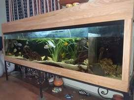 Se vende acuario de 2mts