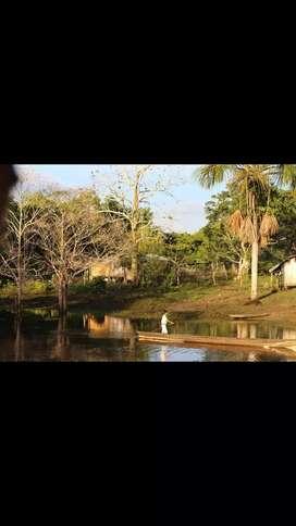 Vendo selva virgen con documentos al día y impuestos pagos