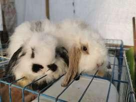Conejos de todas las razas