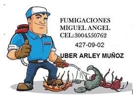fumigaciones Miguel Angel