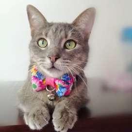 Corbatínes para gatos
