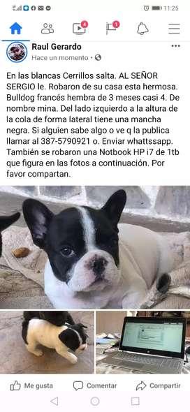 Al señor Sergio un amigo le robaron una Hp i7 de 1tb y 1 cachorra bulldog francés vaquita de 3 meses