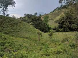 3 hectáreas