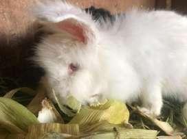 Conejos de varias razas