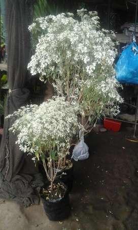 Árbol, Arbusto, Enredadera, Hierbas Y Variedad De Plantas