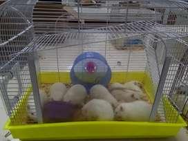 Ratas de laboratorio