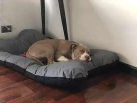 Colchón para perro
