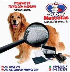 Traumatologia veterinaria unico en Tarapoto..