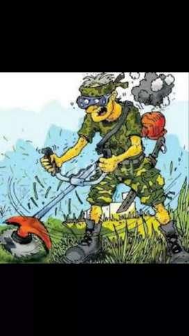 Corte de pasto limpieza de terrenos