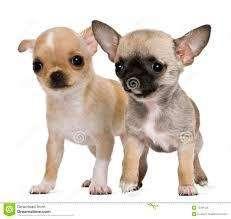 Guarderia Canina en Casa de Flia en Capital