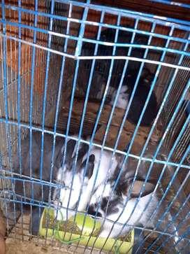 Vendo hermoso conejitos pequeño