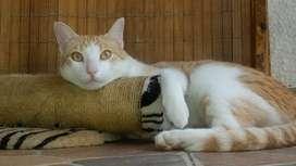 Seda gato en adición