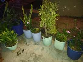 Se vende plantas cultivadas cuidadosamente