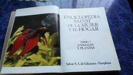 Enciclopedia Salvat De La Mujer Y El Hogar