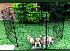 Corral para mascotas
