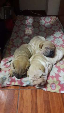 Lindos bbs disponibles