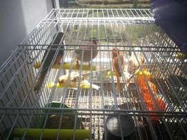 Se venden canarios de  colores vibrantes para mascotas del hogar!!