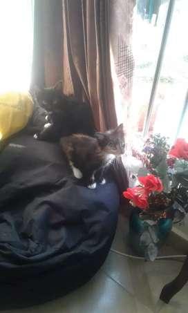 Se da en adopción gatico