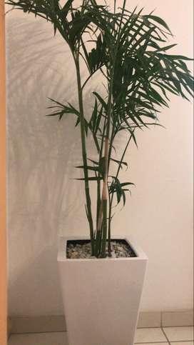 maceta decorativa palmera bambu