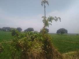 Se venden 12,000 Hás agrícolas en Samán. Sullana. Piura.