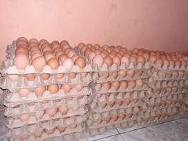 Huevos 3.50