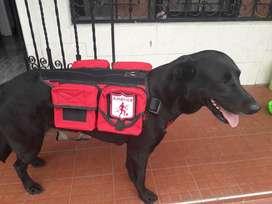 Accesorios Caninos Personalizados