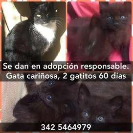 Doy en adopción gata cariñosa y dos gatitos de 60 dias