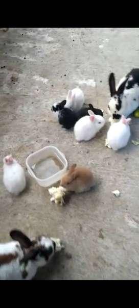 Vendo conejos de 15 dias de nacidos